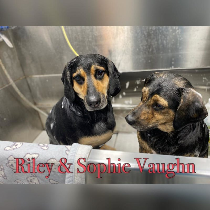 Pet of the Month July 2020
